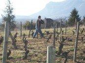 Viticulture en Chautagne